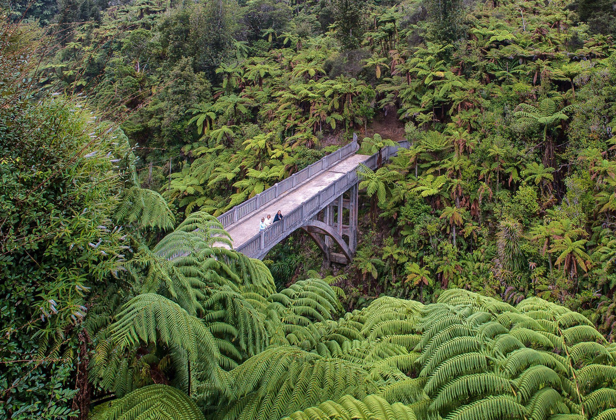 Bridge in a dense forest